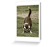 Playful Border Greeting Card