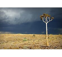 Kokerboom Photographic Print