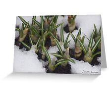 First Day Of Spring???? Greeting Card