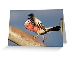 Galah ~ ♫♫ ♪ Lets do the time warp again ♪ ♪ ♬ Greeting Card