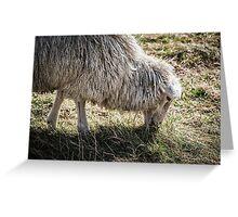 Sheep Grazing at Stonehenge Greeting Card