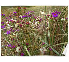 Wild Flowers at Houghton Bay Poster