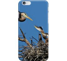 Great Blue Heron with Babies - Ottawa, Ontario iPhone Case/Skin