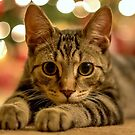 Under The Christmas Lights by Mikell Herrick