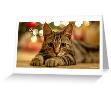 Under The Christmas Lights Greeting Card