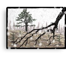 Snowy Washoe State Park Canvas Print
