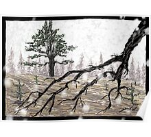 Snowy Washoe State Park Poster