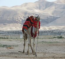 Camel by abbycohen
