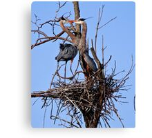 Great Blue Heron Couple - Kempville, Ontario Canvas Print