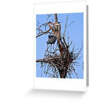 Great Blue Heron Couple - Kempville, Ontario Greeting Card