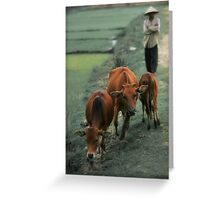 3 Cows Greeting Card