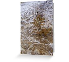 flood waters Greeting Card