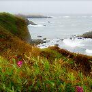 Cliffs by DflyBri