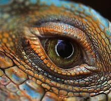 Iguana eye by gordy