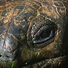 Turtle eye by gordy