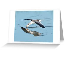 skimming skimmer Greeting Card