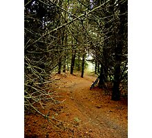 Thetford Winter Singletrack Photographic Print