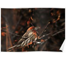 House Finch & Red Leaves Poster