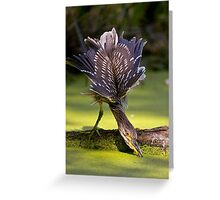 Juvenile Black Crowned Night Heron - Mudd Lake Ottawa Greeting Card
