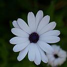 Flora by Rebecca Silverman