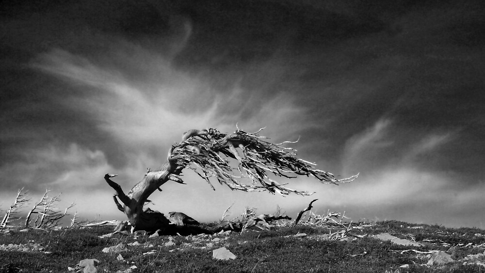 A Brief History of the Wind by Chase Ankeny