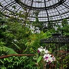 Tropical conservatory by Celeste Mookherjee