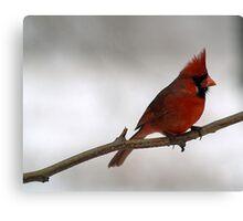 Red Cardinal~Ohio State Bird Canvas Print
