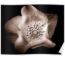 Sepia Flower Girl Poster