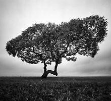 Napier Beach - Tree by Mike Emmett