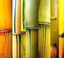 Bamboo Abstract by taueva faotusia