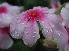 Raindrops by yolanda