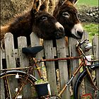 Donkeys and old Bicycle  by Gerard  Horan