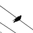Bird on a Wire by Tiffany Dryburgh