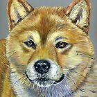 &#x27;Suki&#x27; - Shiba Inu by Michelle Wrighton