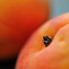 Peachy by Tiffany Dryburgh