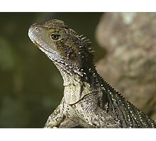 Mr. Lizard Photographic Print
