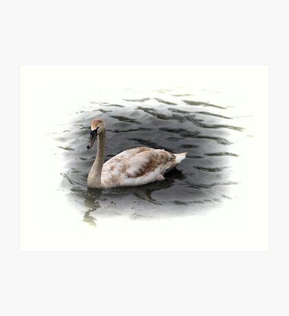 brown feathers swan Art Print