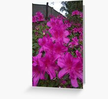 Cascade of Color Greeting Card