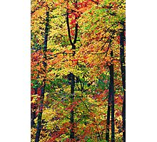FOREST,AUTUMN Photographic Print