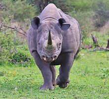 Black Rhino Bull - Powerful Me by LivingWild