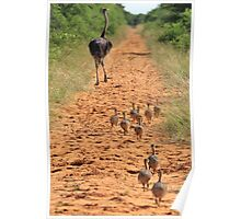 Ostrich Family - Running after Mom. Poster