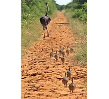 Ostrich Family - Running after Mom. Photographic Print