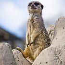 Meerkat by dozzie