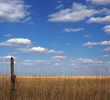 The Single Cedar Fencepost by amandameans