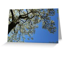 Blossoming white magnolia tree against blue sky in spring Greeting Card