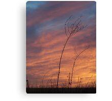 Prairie Grass Against A Panhandle Sunset Canvas Print