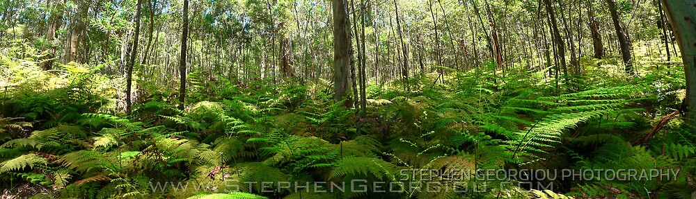 Blue Gum forest by STEPHEN GEORGIOU PHOTOGRAPHY
