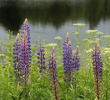 Lupin flowers at a lake by KerstinB