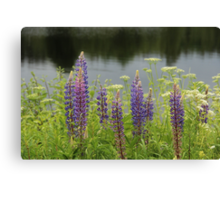 Lupin flowers at a lake Canvas Print