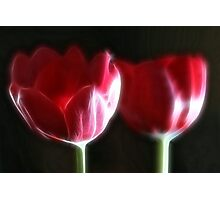Neon Tulip Duo II Photographic Print